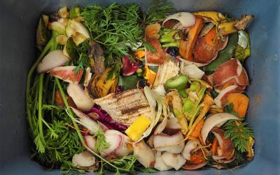 Desperdício de alimentos: o que podemos fazer?